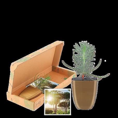 Pinus-package-flyer.png