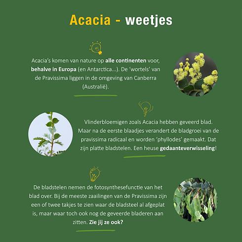 Acacia weetjes.png