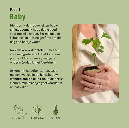 Ginkgo_Baby.png