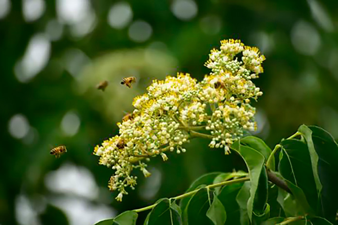 Bees landing on flowers