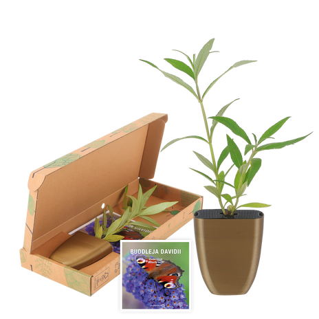 Butterfly bush Letterbox
