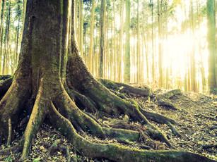 De verborgen kracht van bomen