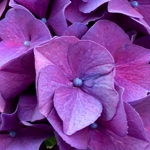 💜summer blooms 💜 #popofcolor #boldcolo