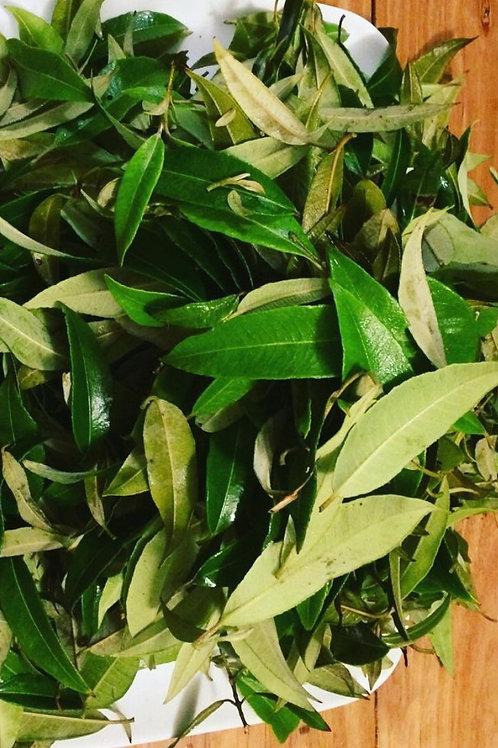 Lemon myrtle 100grams
