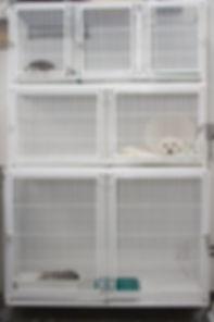 Internação de cães em BH, Internação de gatos em BH, Internação de animas, Internação de cães e gatos,