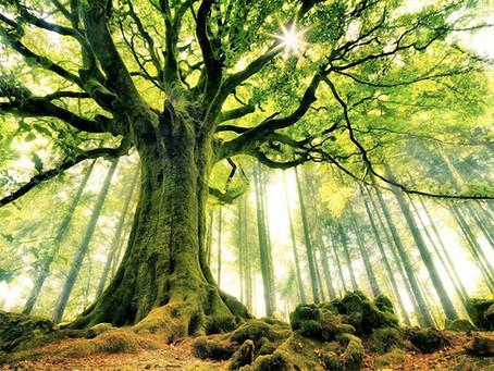 Дерево и его возможности в наружном и внутреннем оформлении