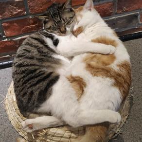 Company Cats!