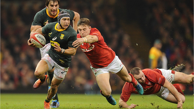 Wales v South Africa - Autumn Series 2021