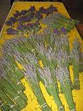 lavender harvest 001.JPG
