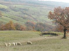 azienda agricola capra matilda