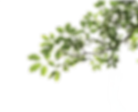 Branch-PNG_edited.png