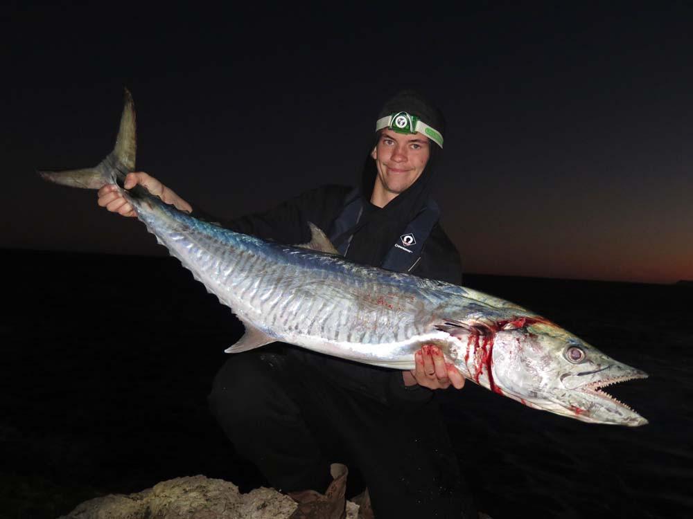 Spanish Mackerel ballooning Quobba WA