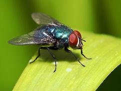 moscas-verano_0.jpg