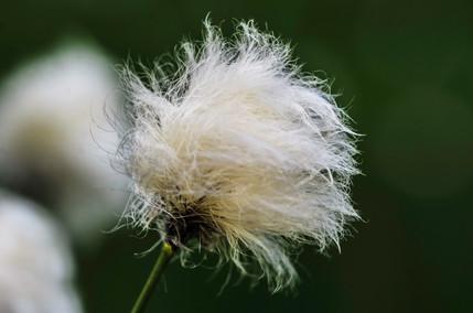 Macro-flowers-6.jpg