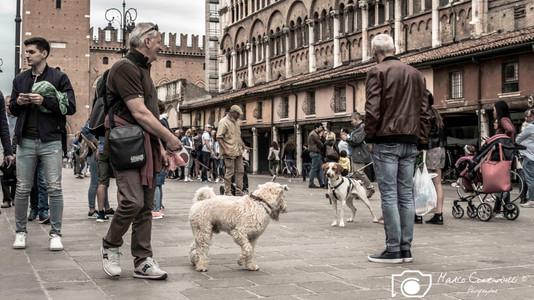 Ferrara-4.jpg