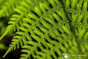 macro-leaves-11.jpg