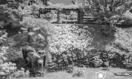 Infrared-4.jpg