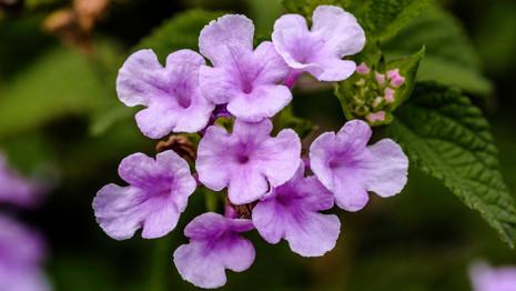 Macro-flowers-2.jpg