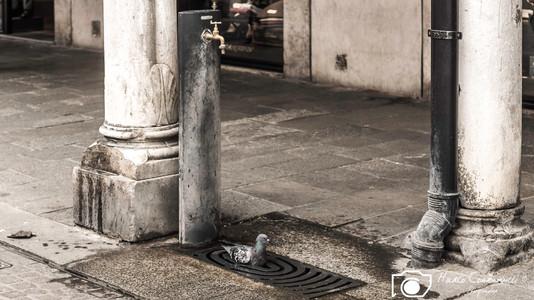 Ferrara-14.jpg