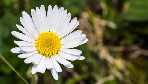 Macro-flowers-4.jpg
