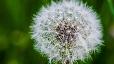 Macro-flowers-8.jpg
