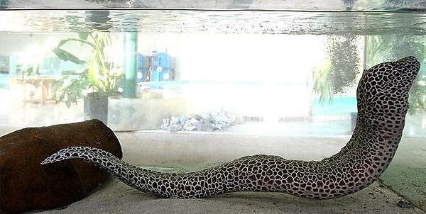 Tropical-Fish-Supplier-for-Large-Aquariu