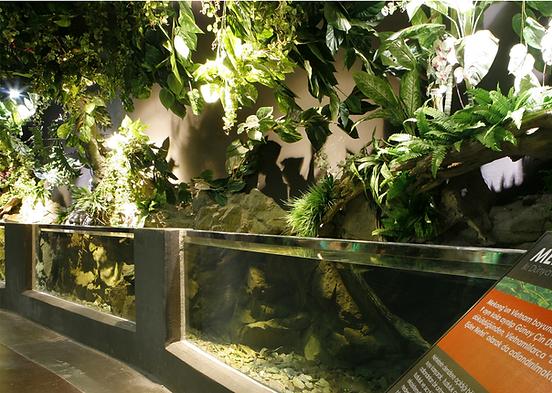 Palladium Aquarium.png
