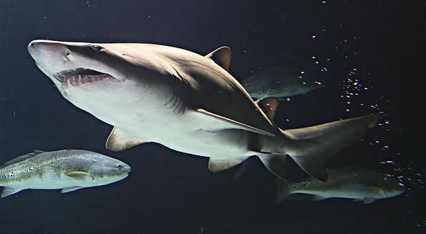 Aquarium-Shark-Supply.jpg