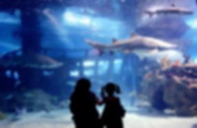 shark fish11.jpg