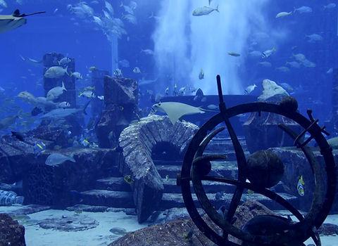 Büyük Akvaryum Projeleri