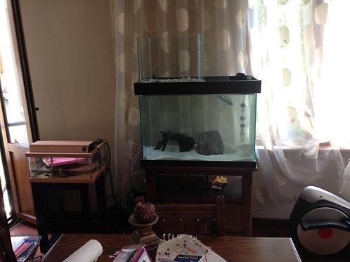 80 cm Su Kaplumbağası Akvaryumları
