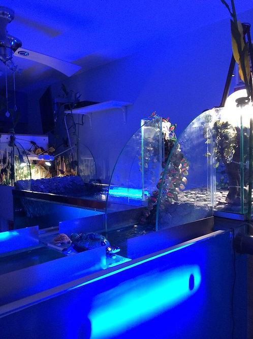 Teraryum Sürügen Akvaryumları 160cm