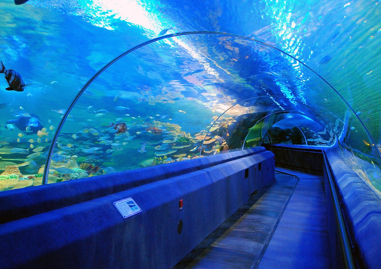 Tunnel Aquarium.jpg