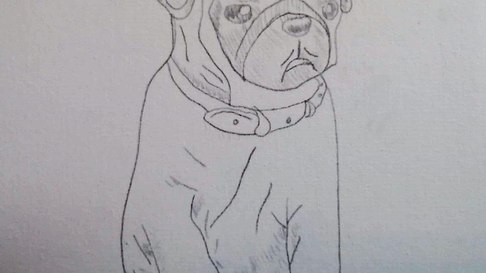 Pug Canvas