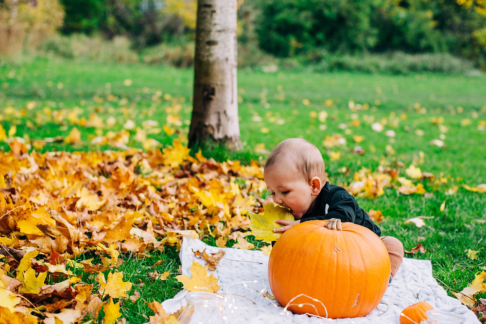 Baby playing with leaves, sitting with pumpkin in autumnal Heaton Park, Newcastle