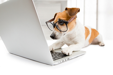 DOG-With-Glasses-At-Computer.png