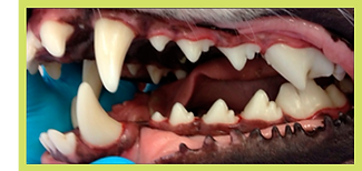 afterdental.png