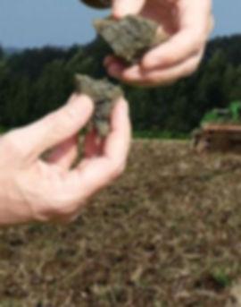 почва после культивации.jpg