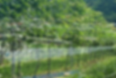 yamanokyou-ota.png