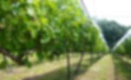hiyama_winery.JPG