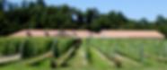 azumino-winery.png