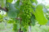 miyoshi-winery.png