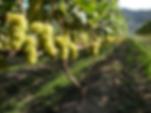 yamabe-winery.png