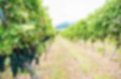 tsukuba_winery.jpg