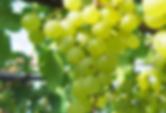 sera-winery.png
