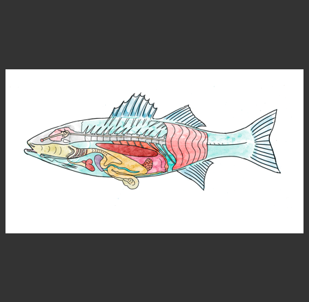 Envirokids Magazine Fish Diagram