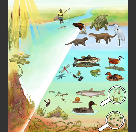 Envirokids: River Food Web