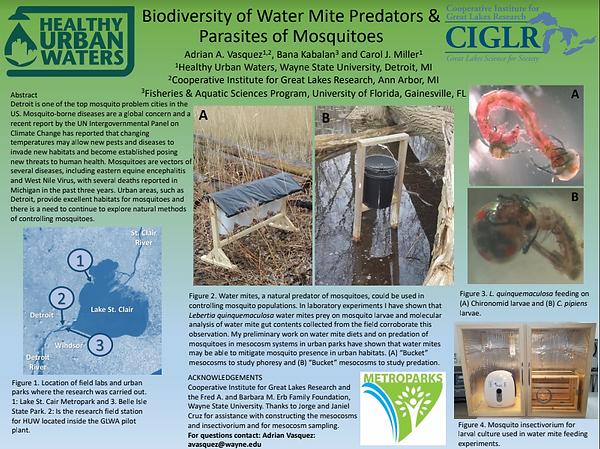 Biodiversity of water mite predators.png