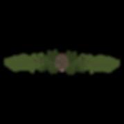 Las ramas de pino Spruce 5