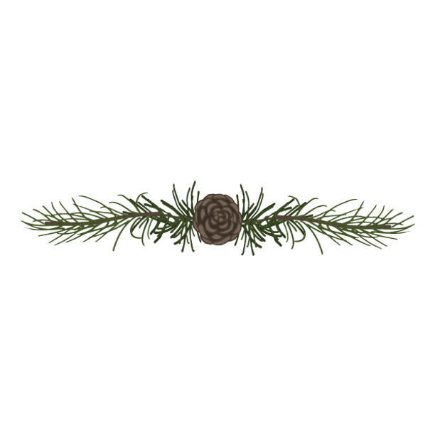 Pine Spruce Branches 5